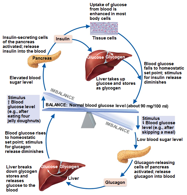 The Roller Coaster Ride Of Blood Sugars